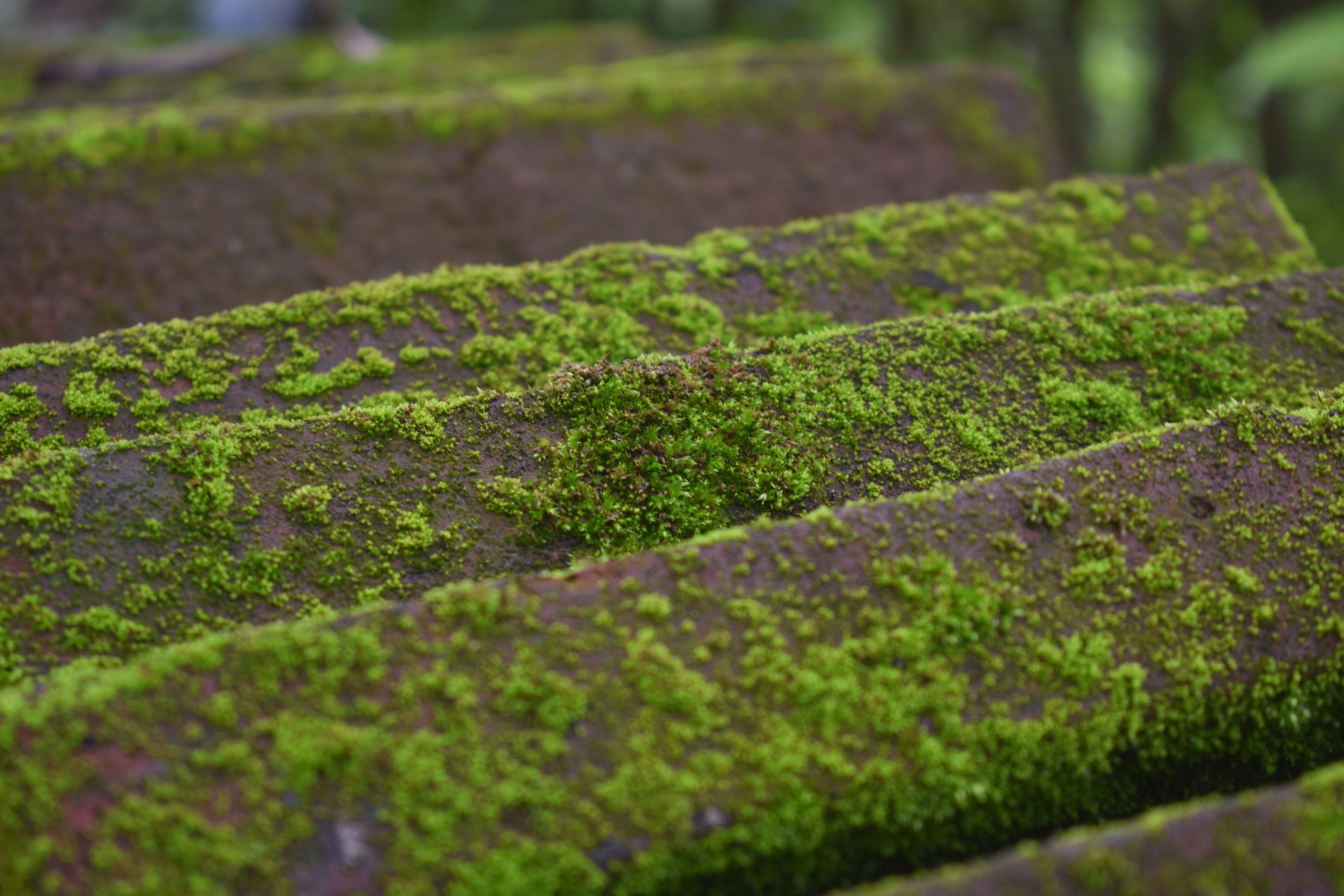 Free stock photo of aged, moist, moisture, moss