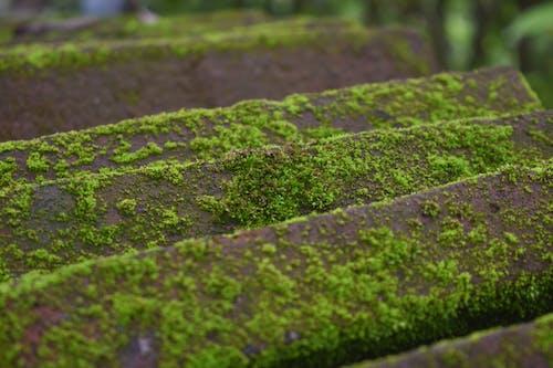 Безкоштовне стокове фото на тему «вивітрений, вологий, мох, мох на скелях»