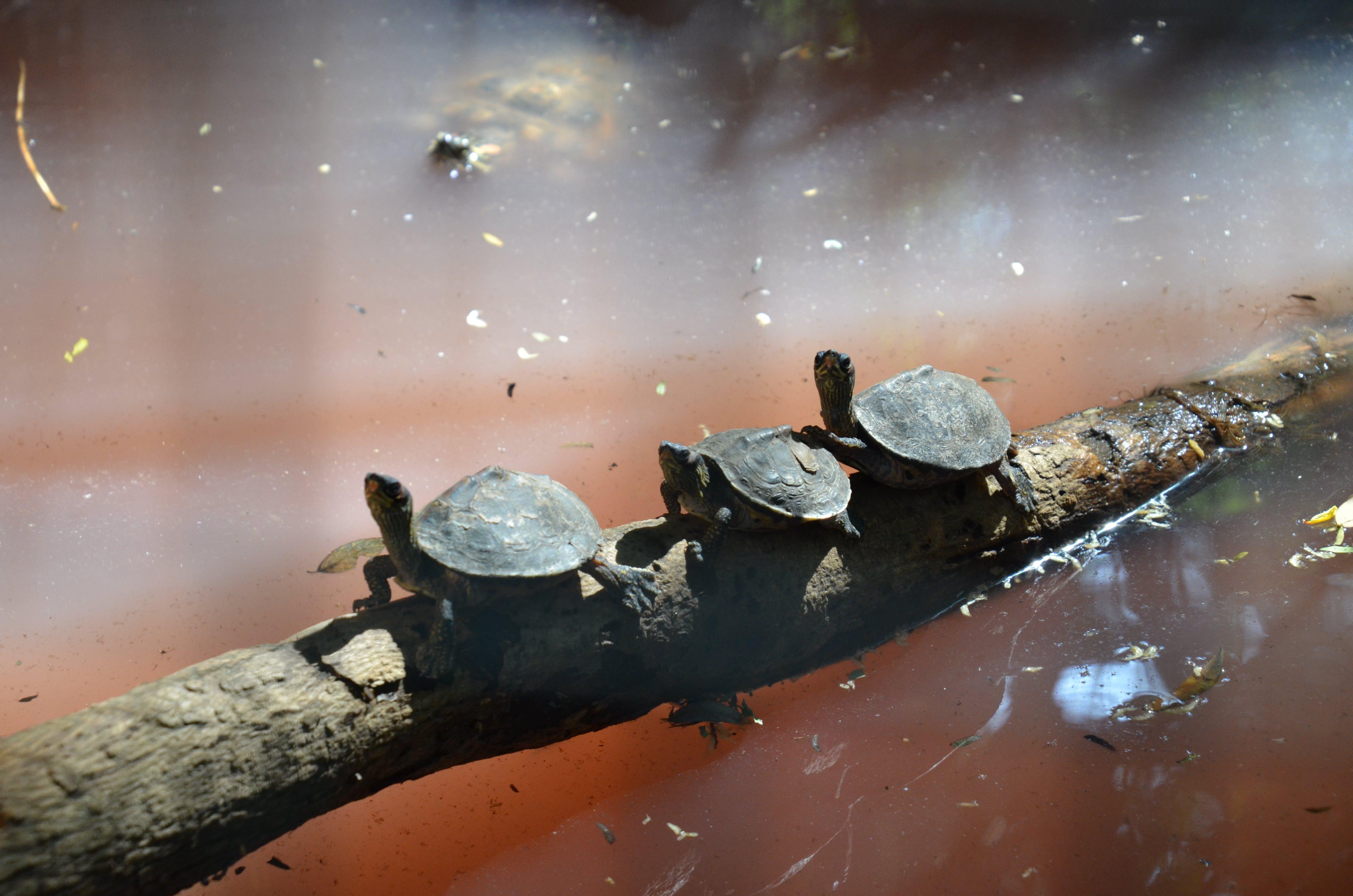 Free stock photo of link, tortoise