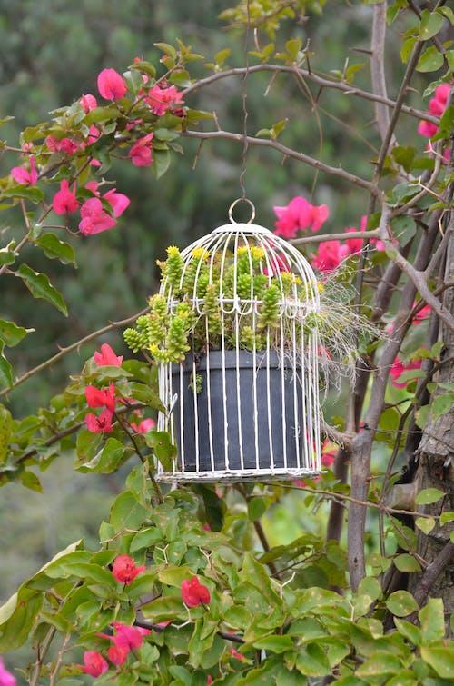 White Bird Cage Hanging on Tree