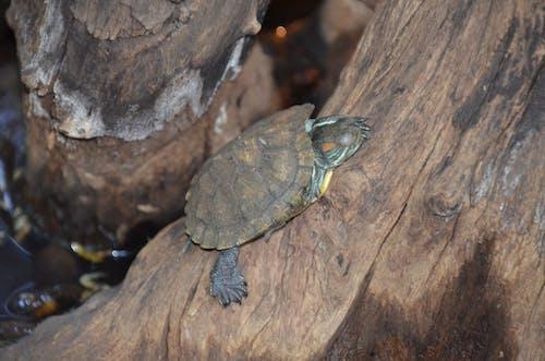 Imagine de stoc gratuită din arbore, broască țestoasă, camuflaj, lemn