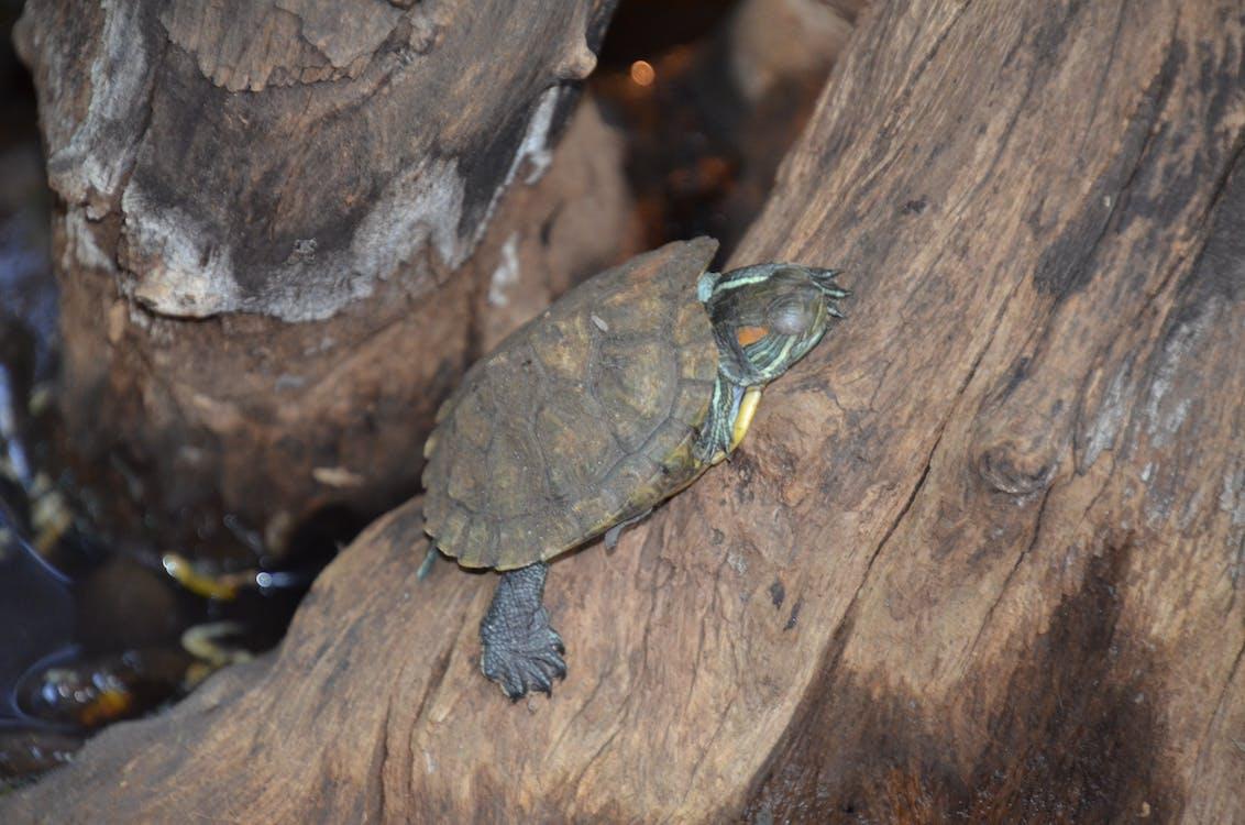 camouflage, tiny, tortoise