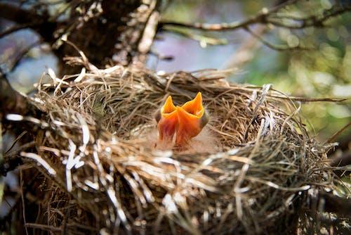 Brown Bird on Brown Nest