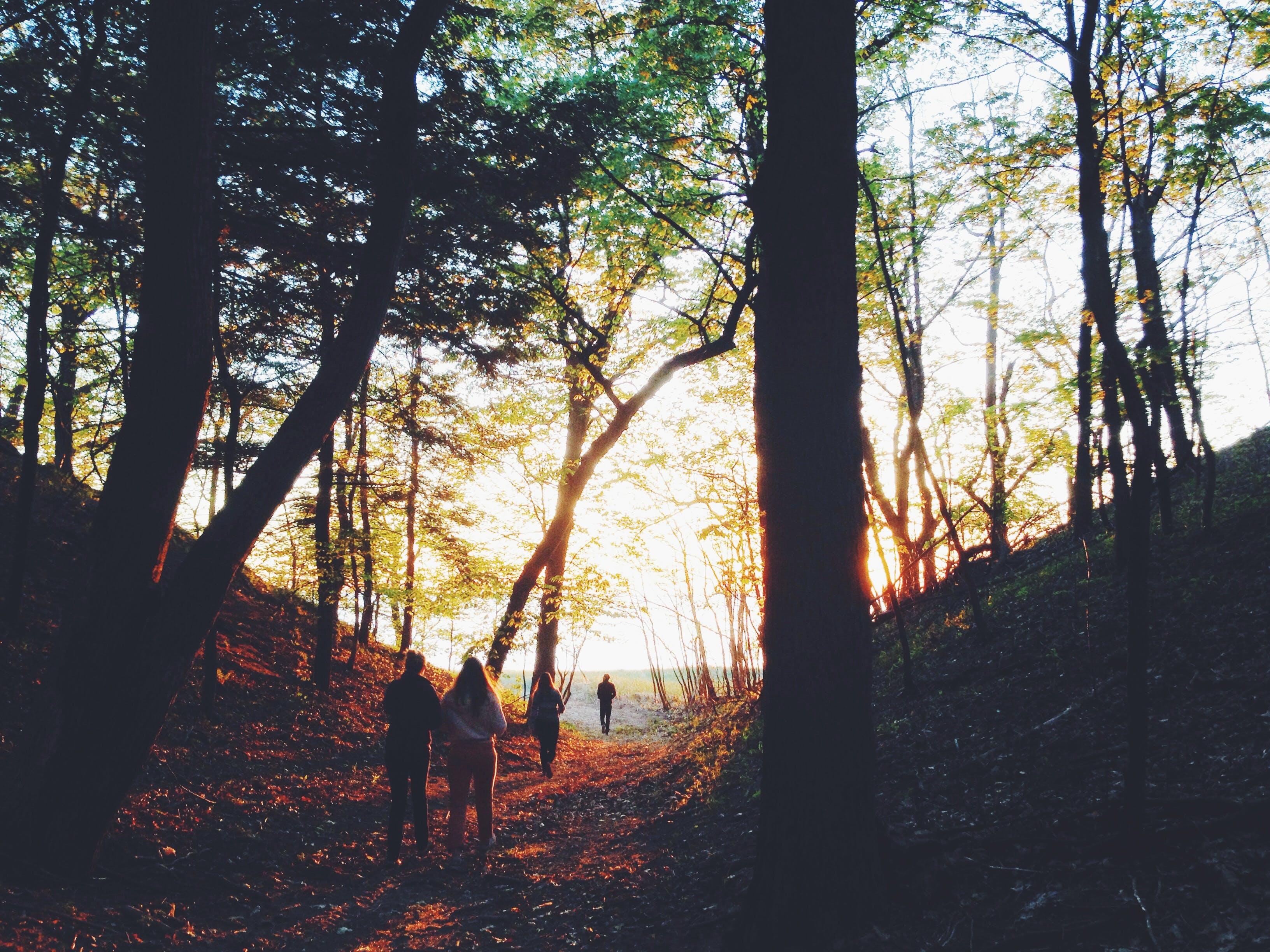 People Walking on Pathway