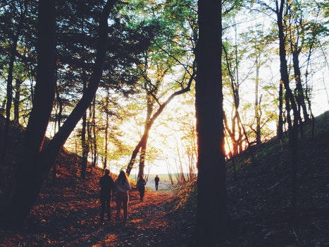 Free stock photo of nature, sunset, walking, forest