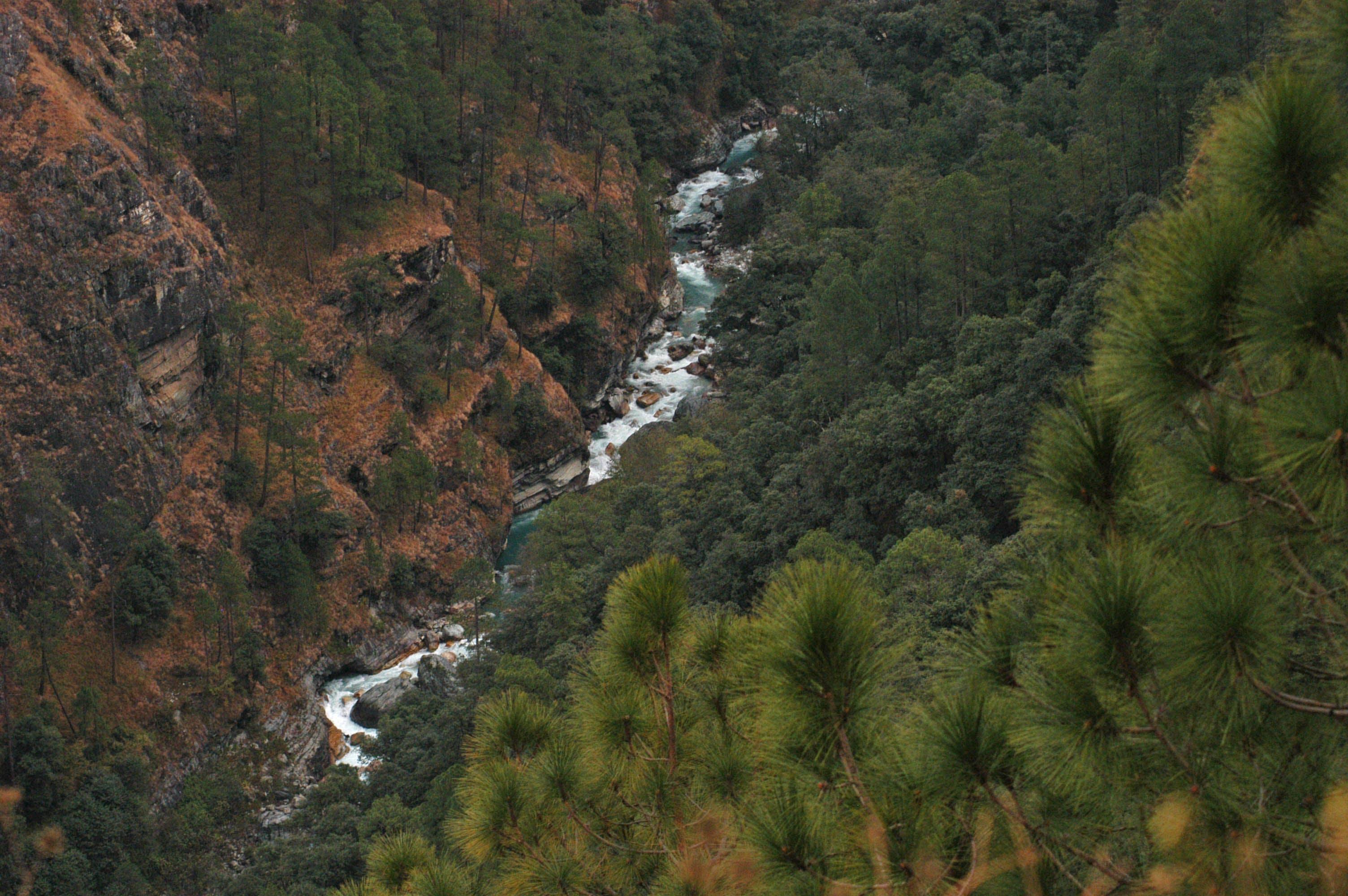 Free stock photo of forest, himalayas, india, landscape