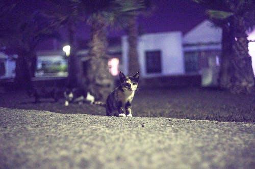 Foto stok gratis anak kucing, binatang, fauna, hewan
