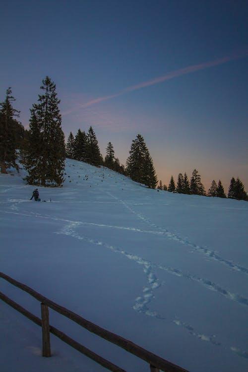 Free stock photo of evening-sky, snow, trees, winter
