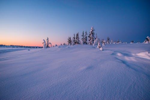 Безкоштовне стокове фото на тему «зима»