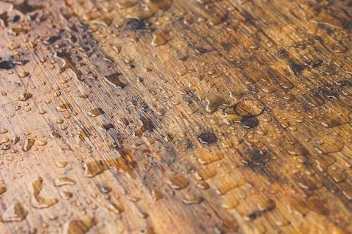Foto profissional grátis de água, chuva, gotas de chuva, madeira