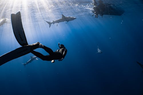 Full body faceless diver in wetsuit snorkeling mask and flippers swimming in dark blue seawater near fish