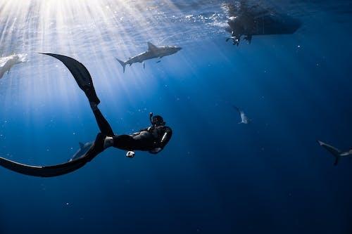 Man in Black Wet Suit Under Water
