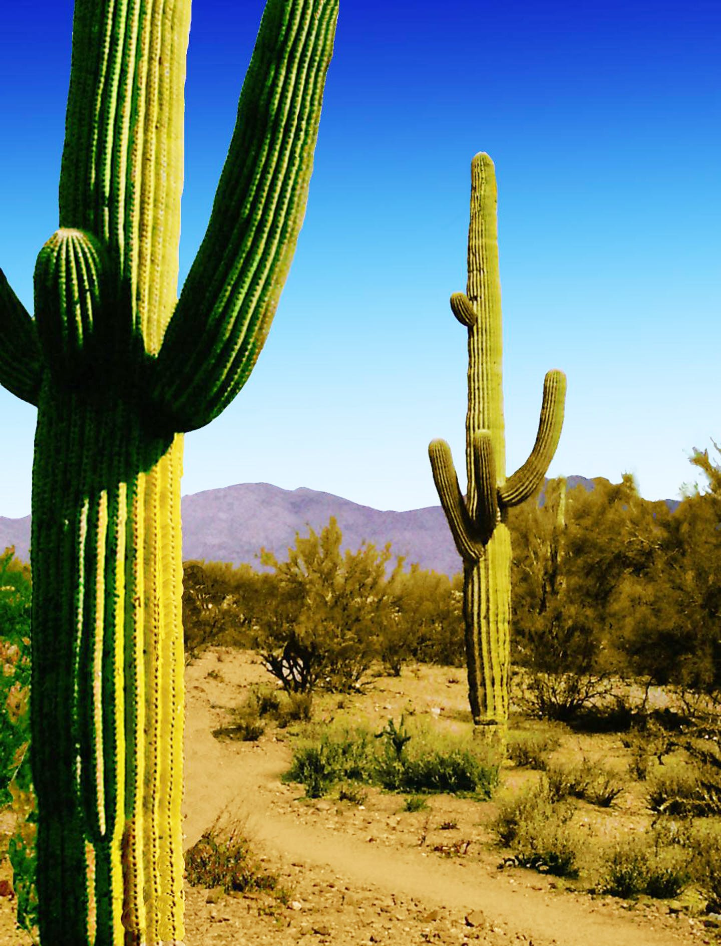 Free stock photo of cactus, southwest