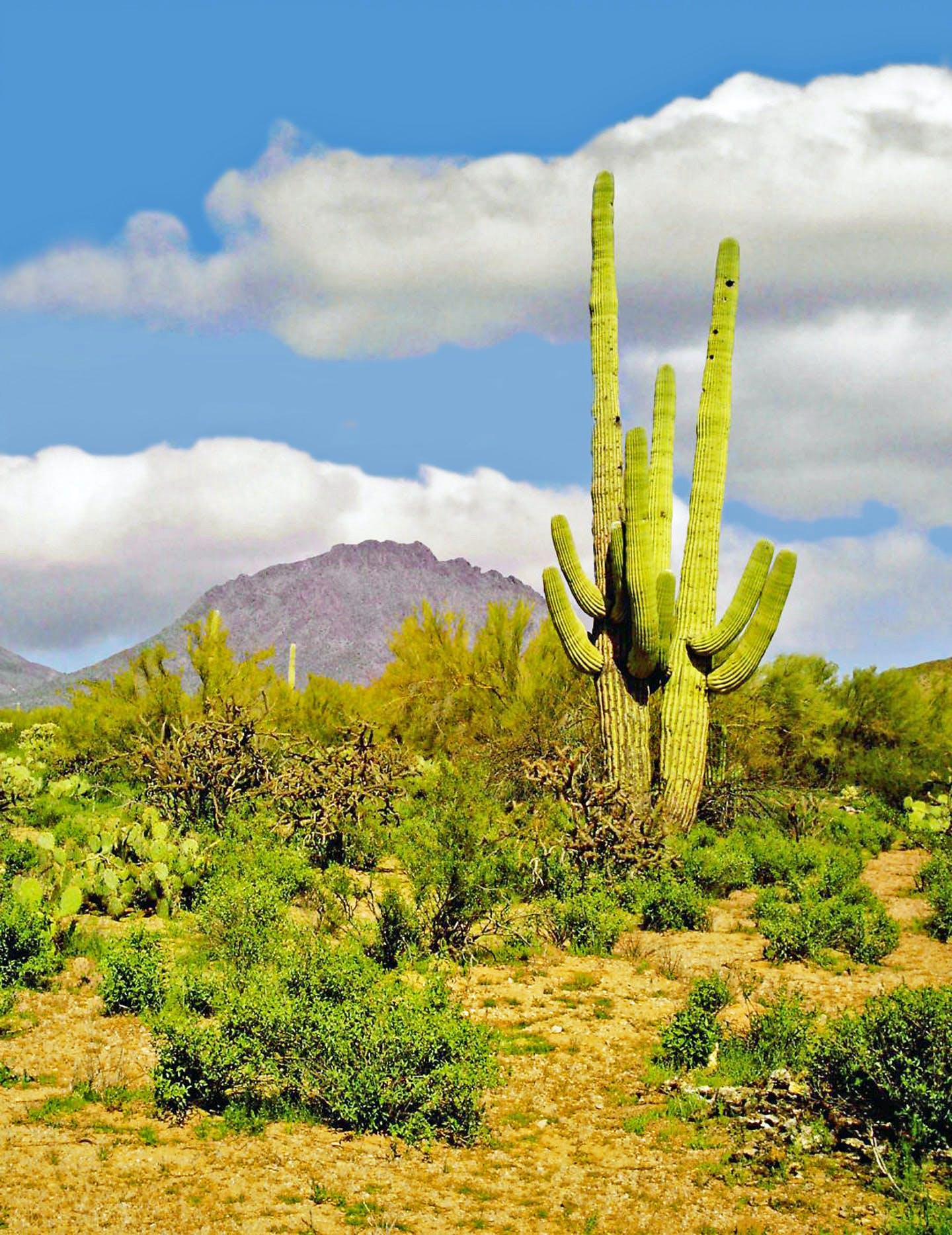 Free stock photo of cactus, southwest