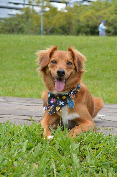 Free stock photo of dog park smile