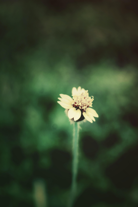Free stock photo of alone, beautiful flowers, green, macro