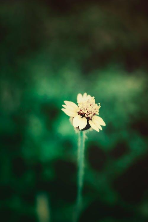 Gratis arkivbilde med grønn, makro, vakre blomster, villblomst