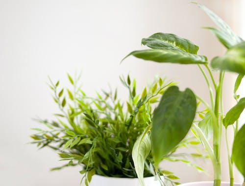 Δωρεάν στοκ φωτογραφιών με λουλούδια σπίτι, πράσινος, φύση, φυτά