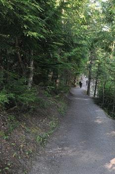 Free stock photo of walking, garden, path, park