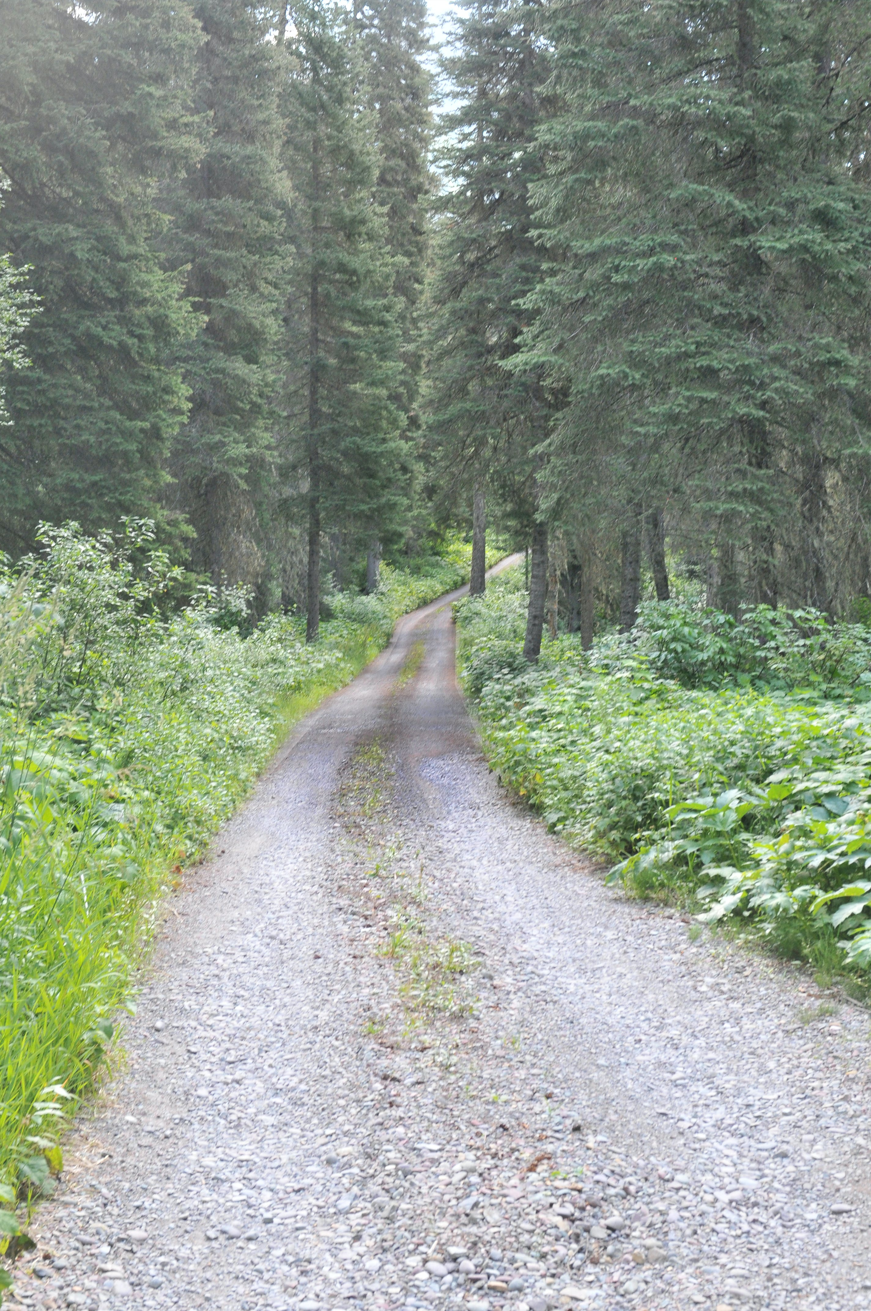 Free stock photo of road, path, travel, dirt road