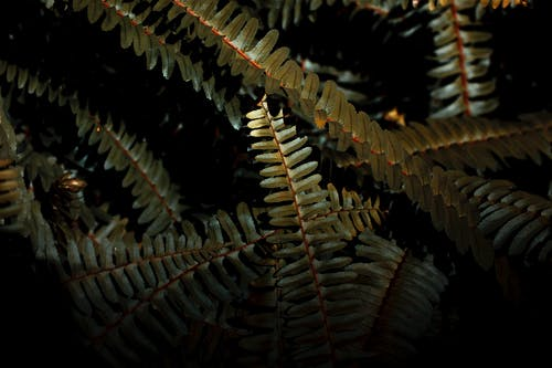 Long branches of fern with leafy fronds