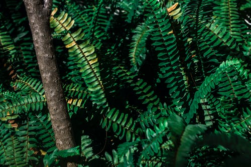 High angle of long branches of fern growing in lush tropical forest in natural habitat