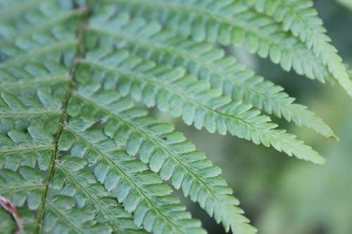 Free stock photo of fern, nature