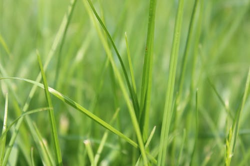 Free stock photo of grass, green, macro, nature