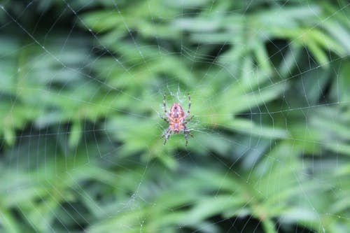 Free stock photo of Lionface, nature, spider, spider web