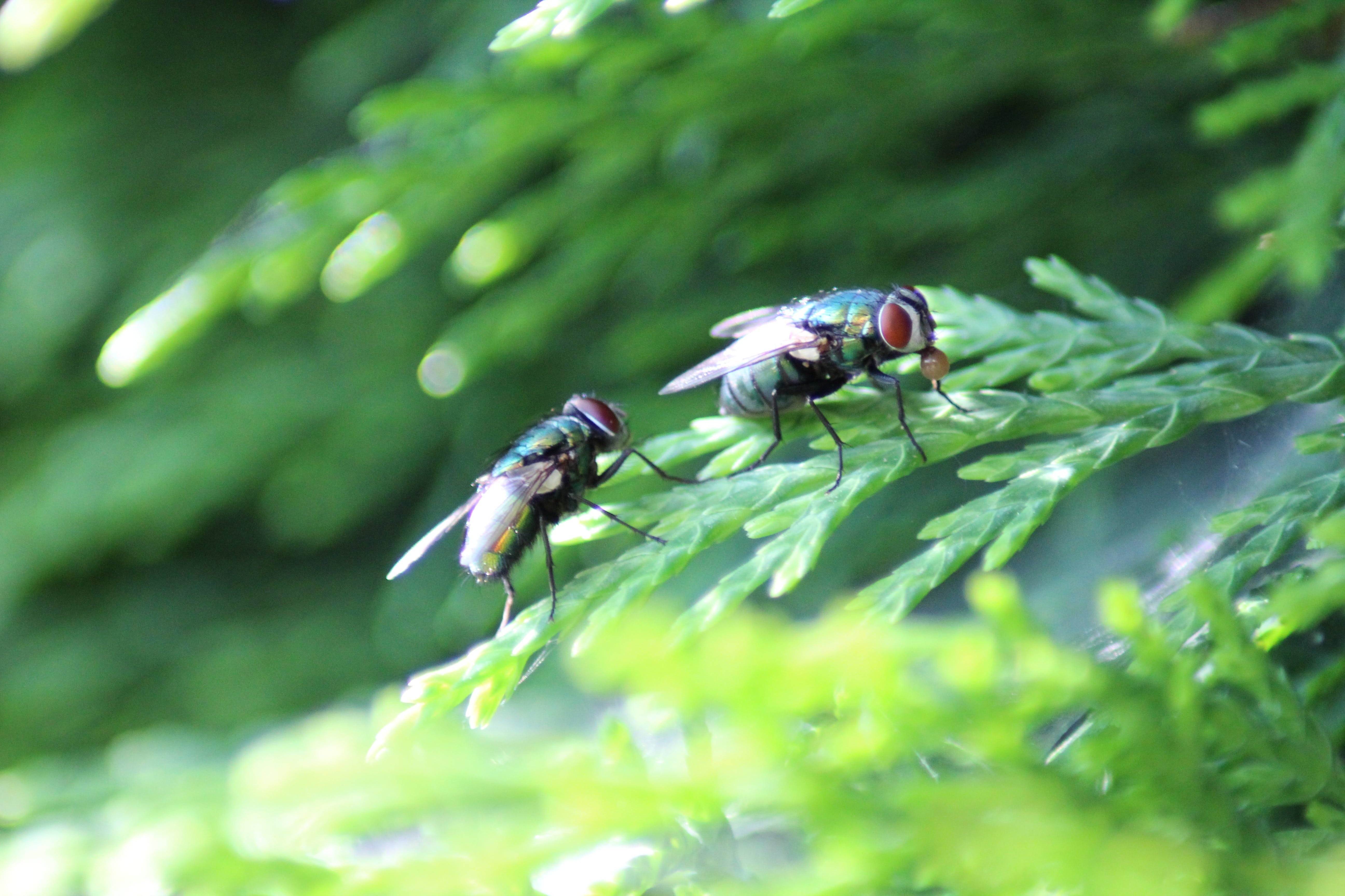 Free stock photo of bubble gum, fly, nature