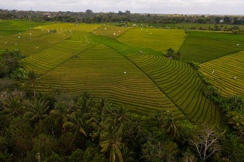 Immagine gratuita di agricoltura, alberi, ambiente
