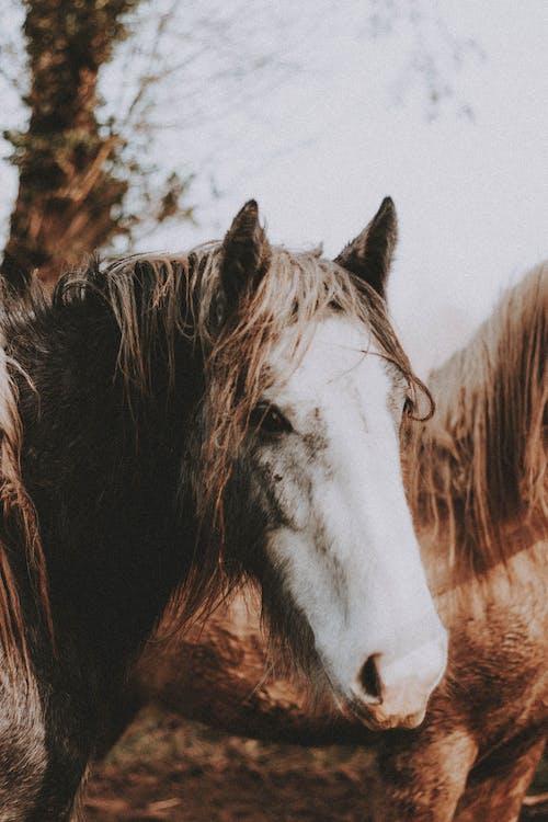Herd of horses standing in countryside