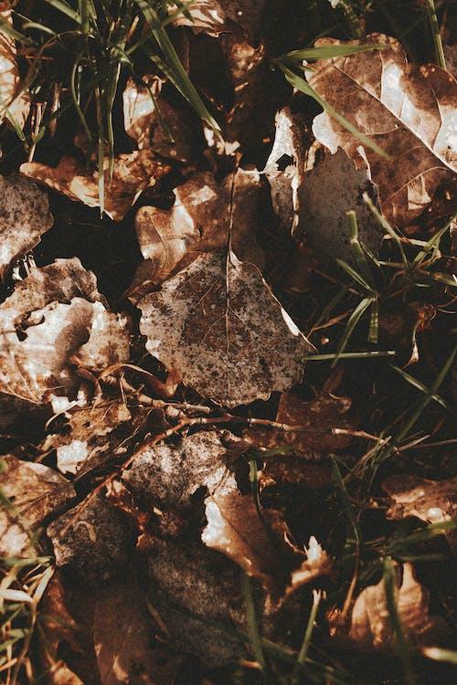 乾燥, 乾的, 俯視圖 的 免費圖庫相片