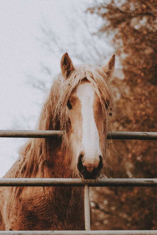 Brown horse looking at camera near fence on ranch