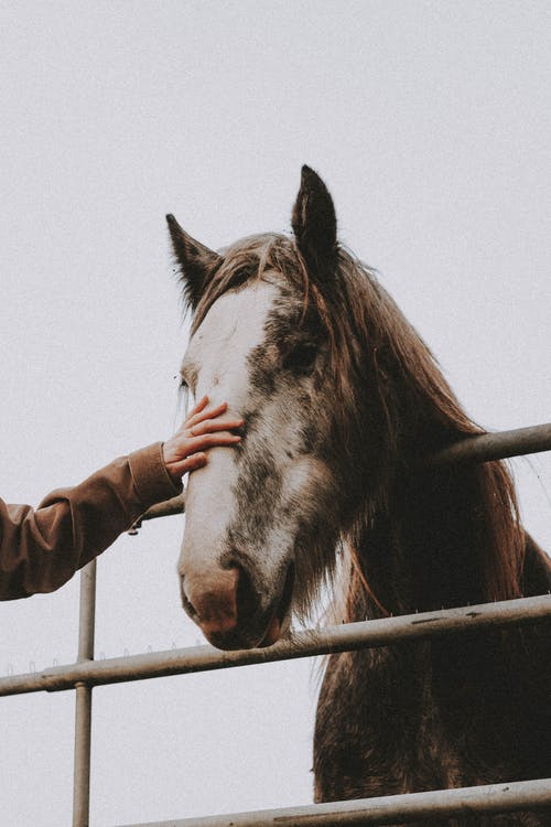 Person in Brown Leather Jacket Holding Brown Horse