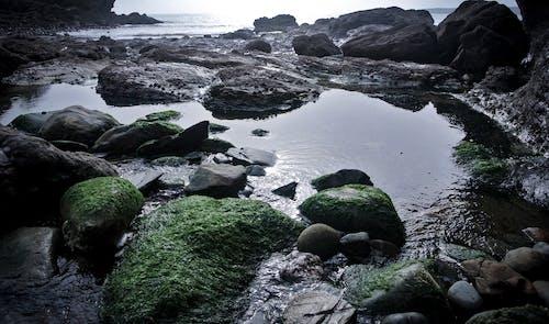 Free stock photo of algae, beach, cornwall, moss