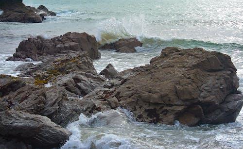 Free stock photo of algae, barnacle, barnacles, cliff coast