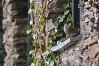 bird, wall, plants