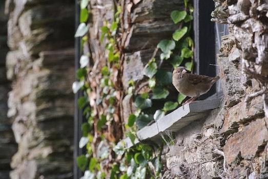 Brown Bird on Window