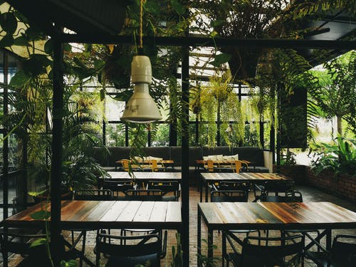Free stock photo of cafe food, cafe table, dark green plants