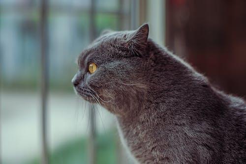Základová fotografie zdarma na téma divočina, domácí mazlíček, kočka