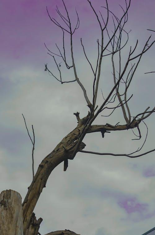 Fotos de stock gratuitas de 300mm, antiguo, árbol
