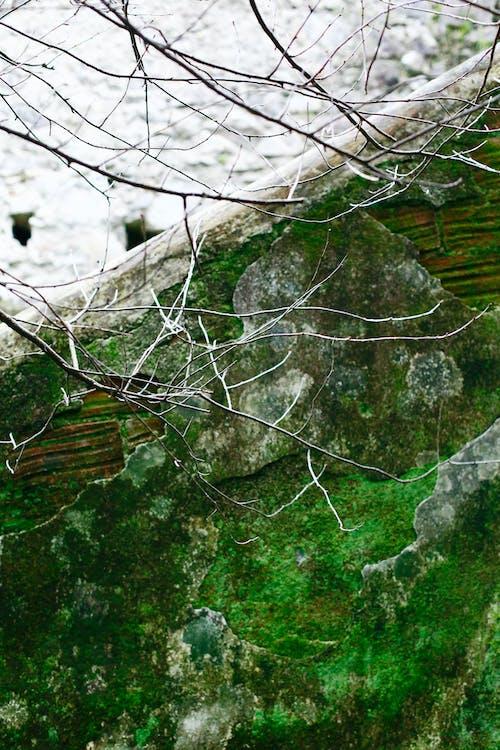 Immagine gratuita di antico, ceneri, muro