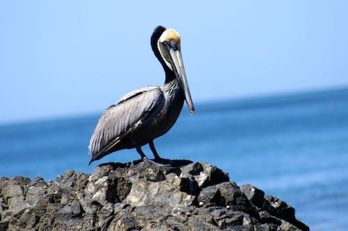 doğa, vahşi hayvan içeren Ücretsiz stok fotoğraf