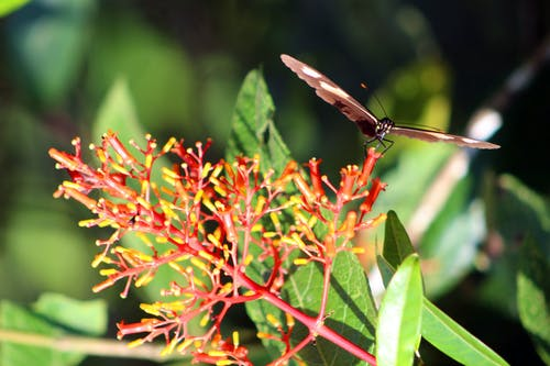böcek, çiçek, doğa, kelebek içeren Ücretsiz stok fotoğraf