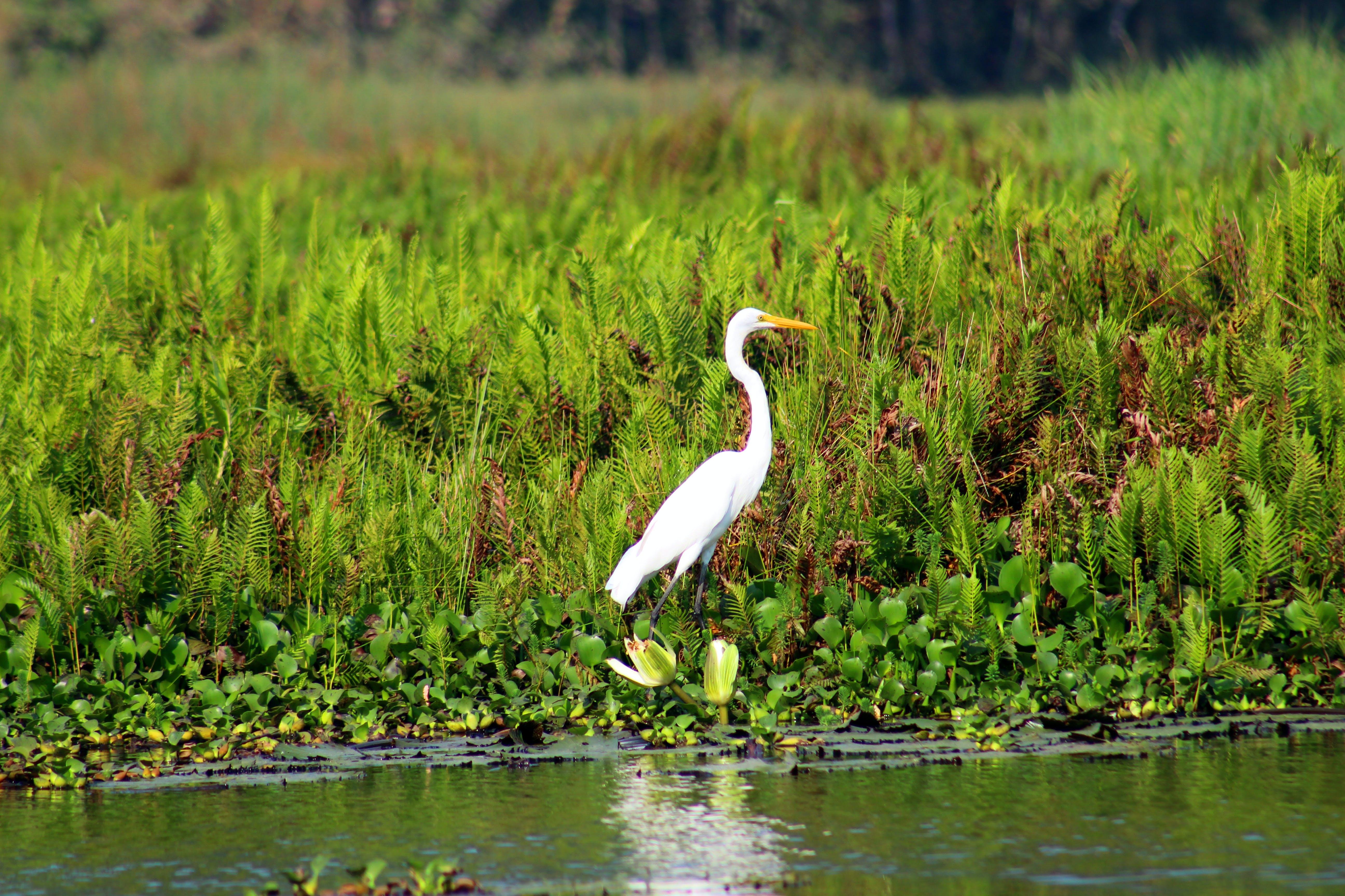 Kostenloses Stock Foto zu federn, gras, lagune, landschaft
