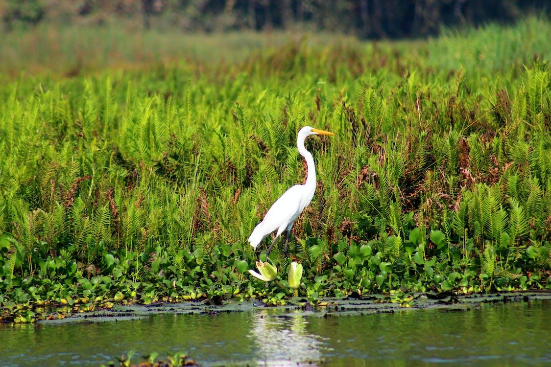 White Bird Near Spring River