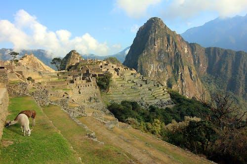 廢墟, 景觀, 野生動物, 駱駝 的 免費圖庫相片