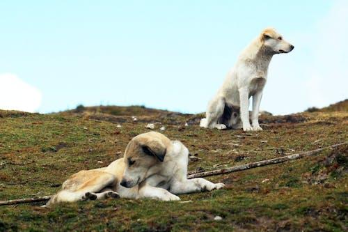 doğa, hayvan, köpekler, vahşi yaşam içeren Ücretsiz stok fotoğraf