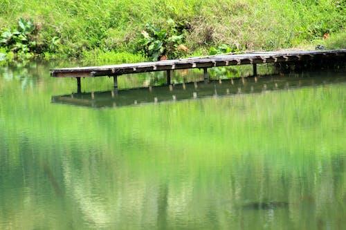doğa, gölcük içeren Ücretsiz stok fotoğraf